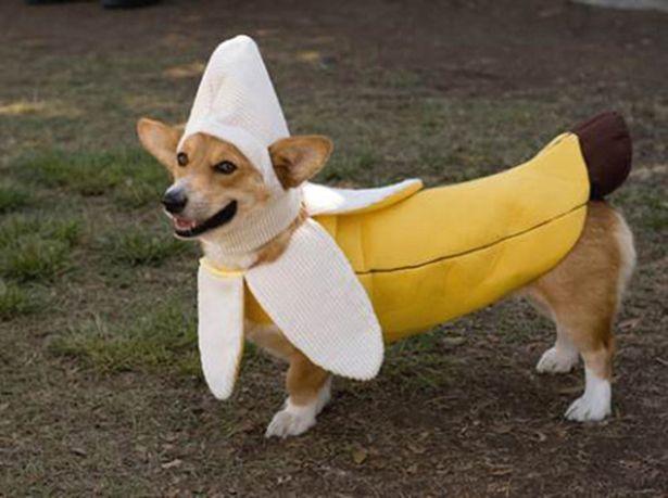 banana-dog.jpg