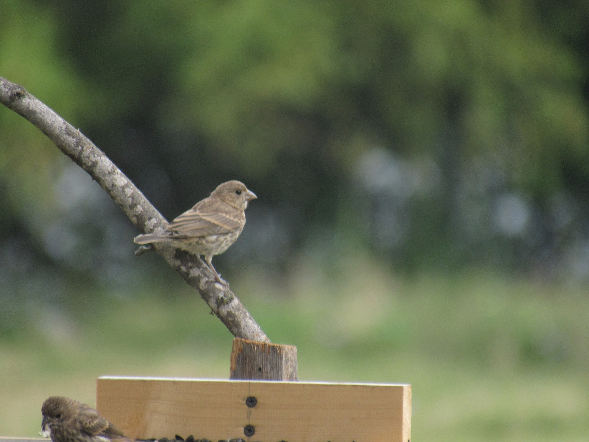 bird on feeder perch.jpg