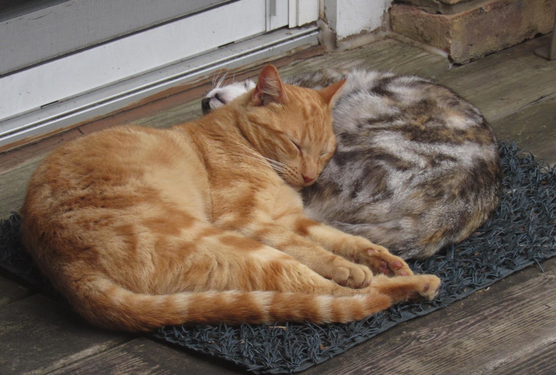 Bud and Sophia napping.jpg