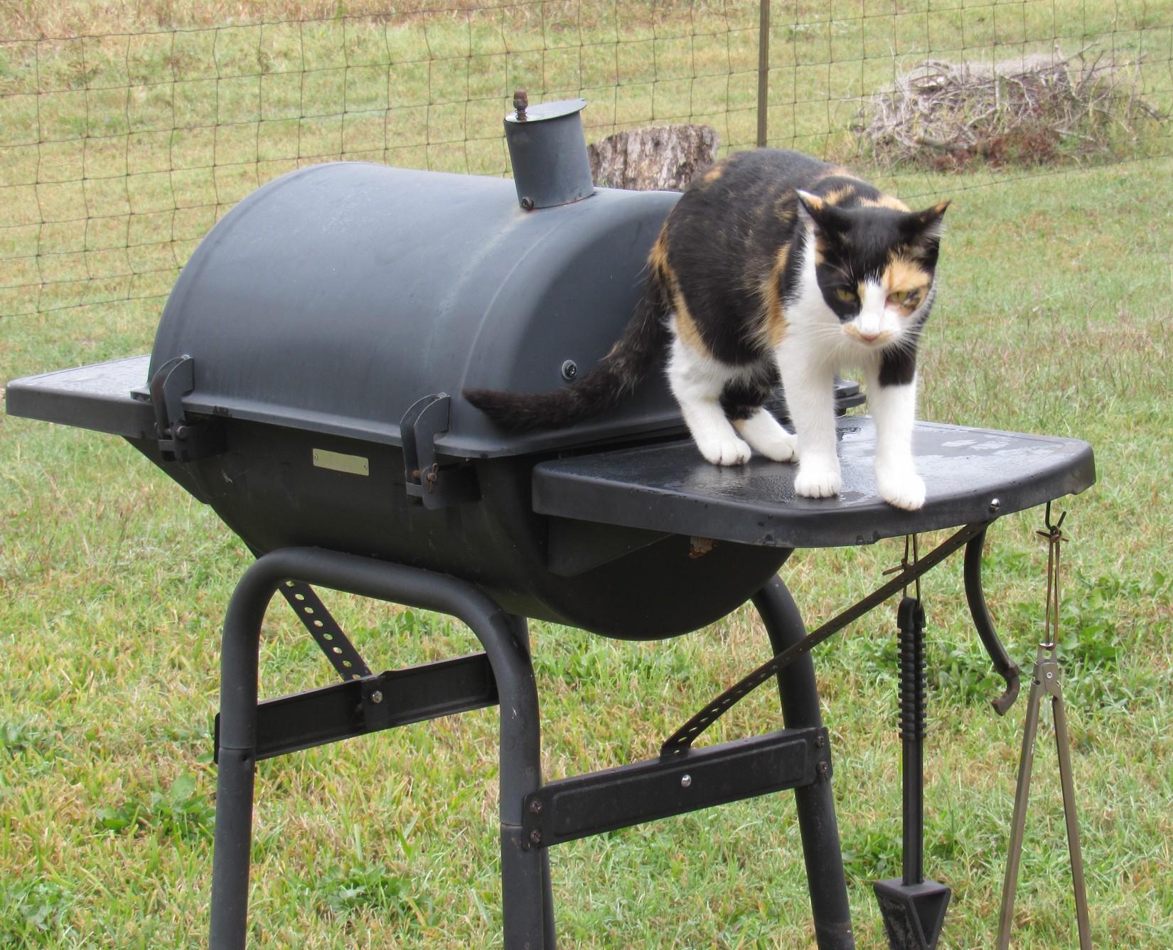 Cali on grill.jpg