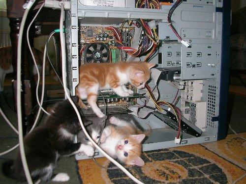 cat-repair.jpg