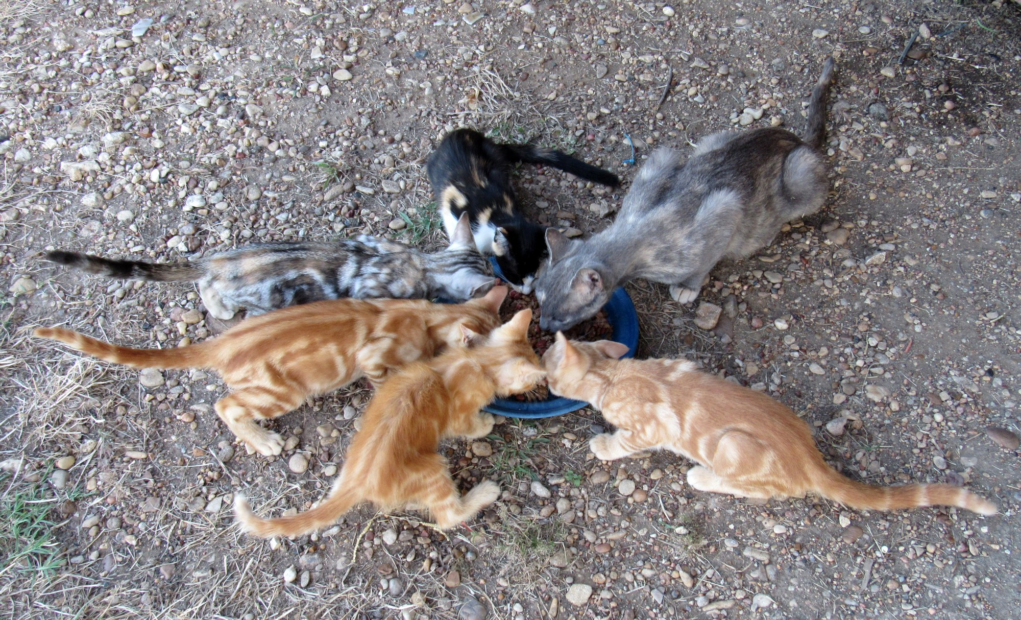 Cats b.jpg