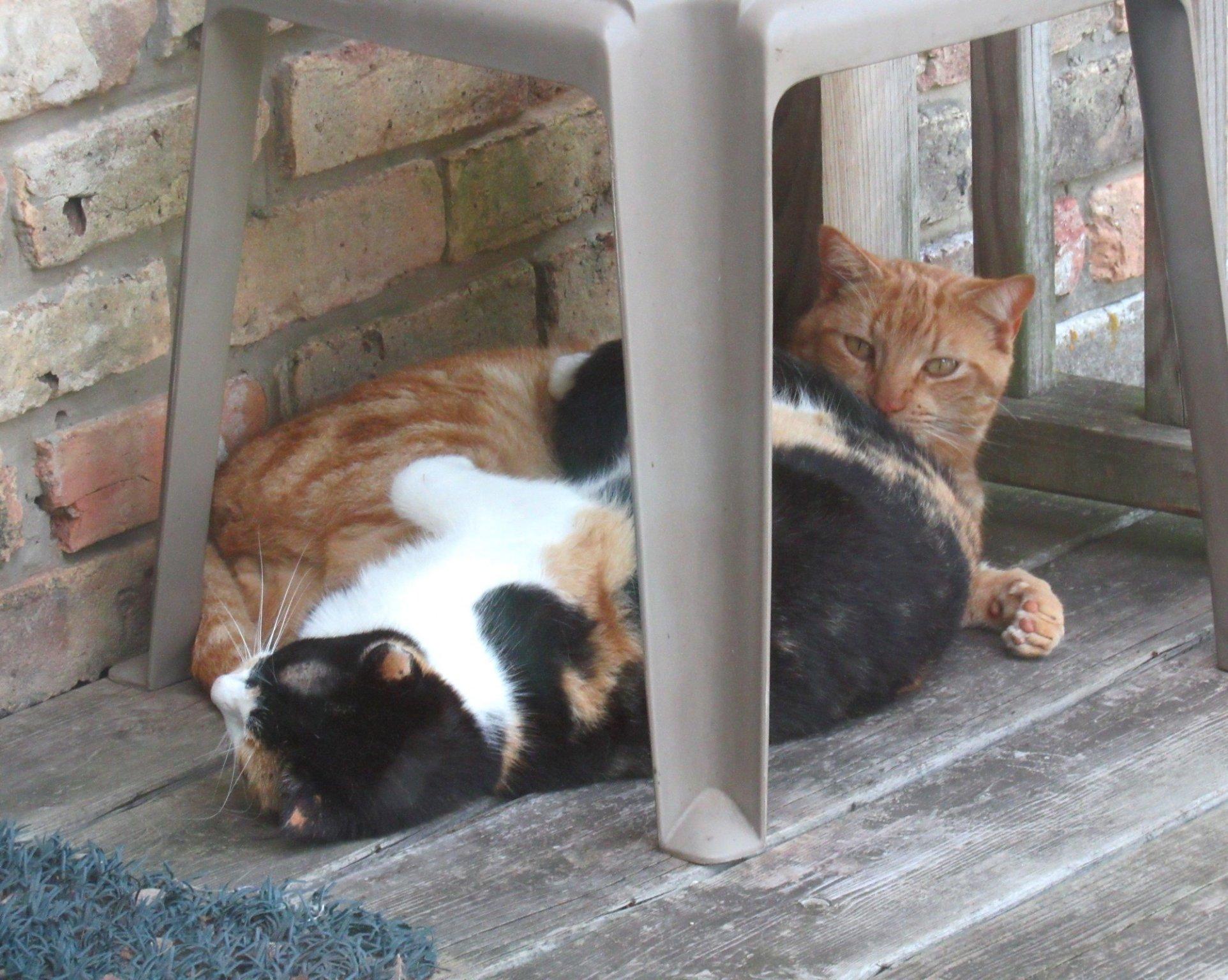 Cats c.jpg