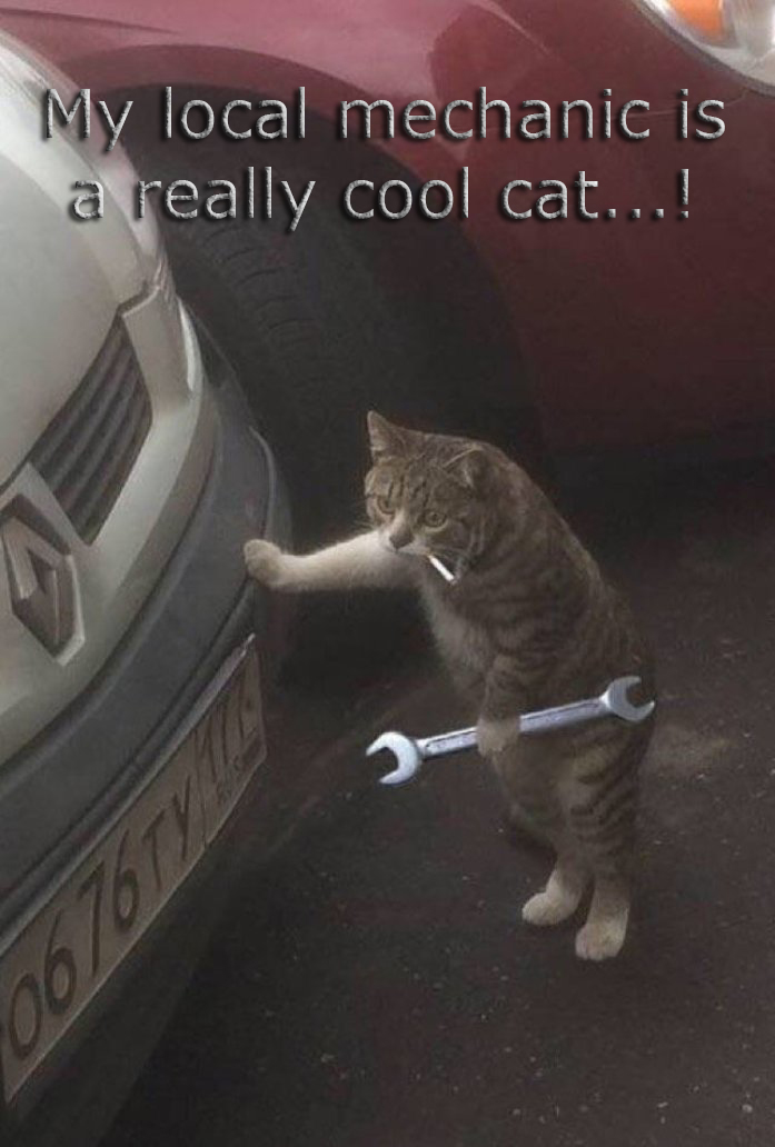 CoolCat1.jpg