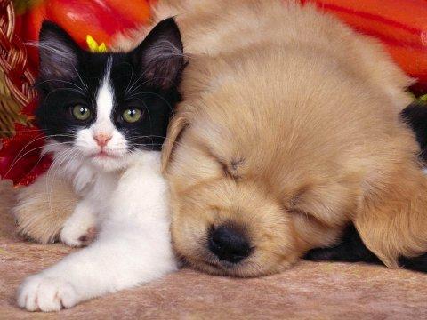 funny-cat_112601-480x360[1].jpg