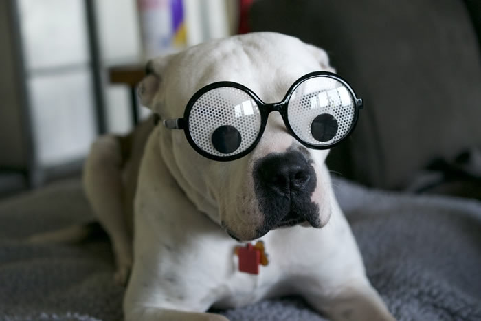 googly-dog.jpg