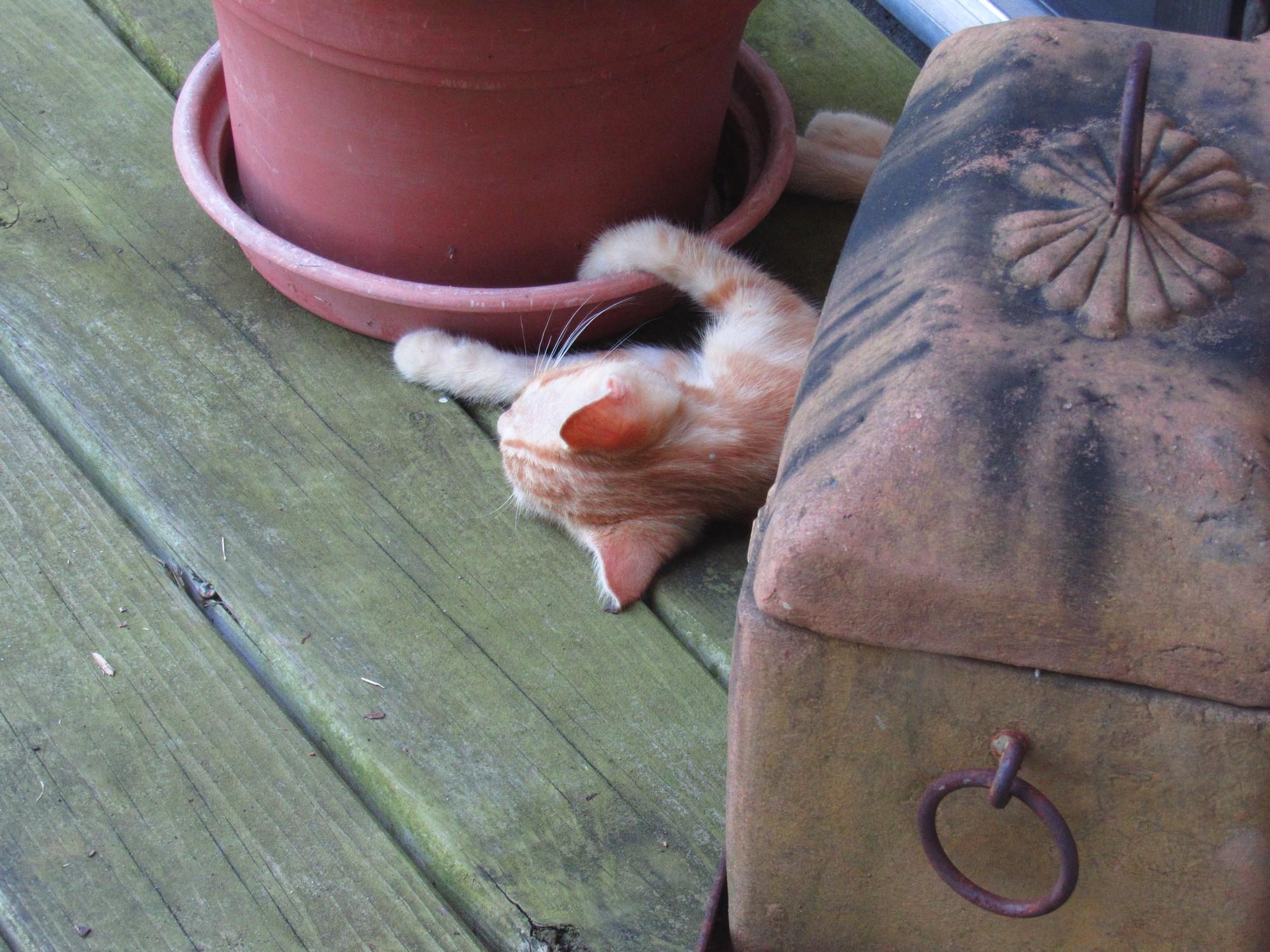 Hangin' onto my pot.jpg