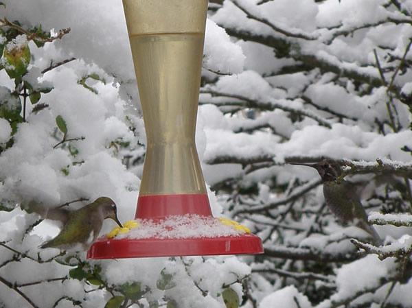 hummers in snow.JPG