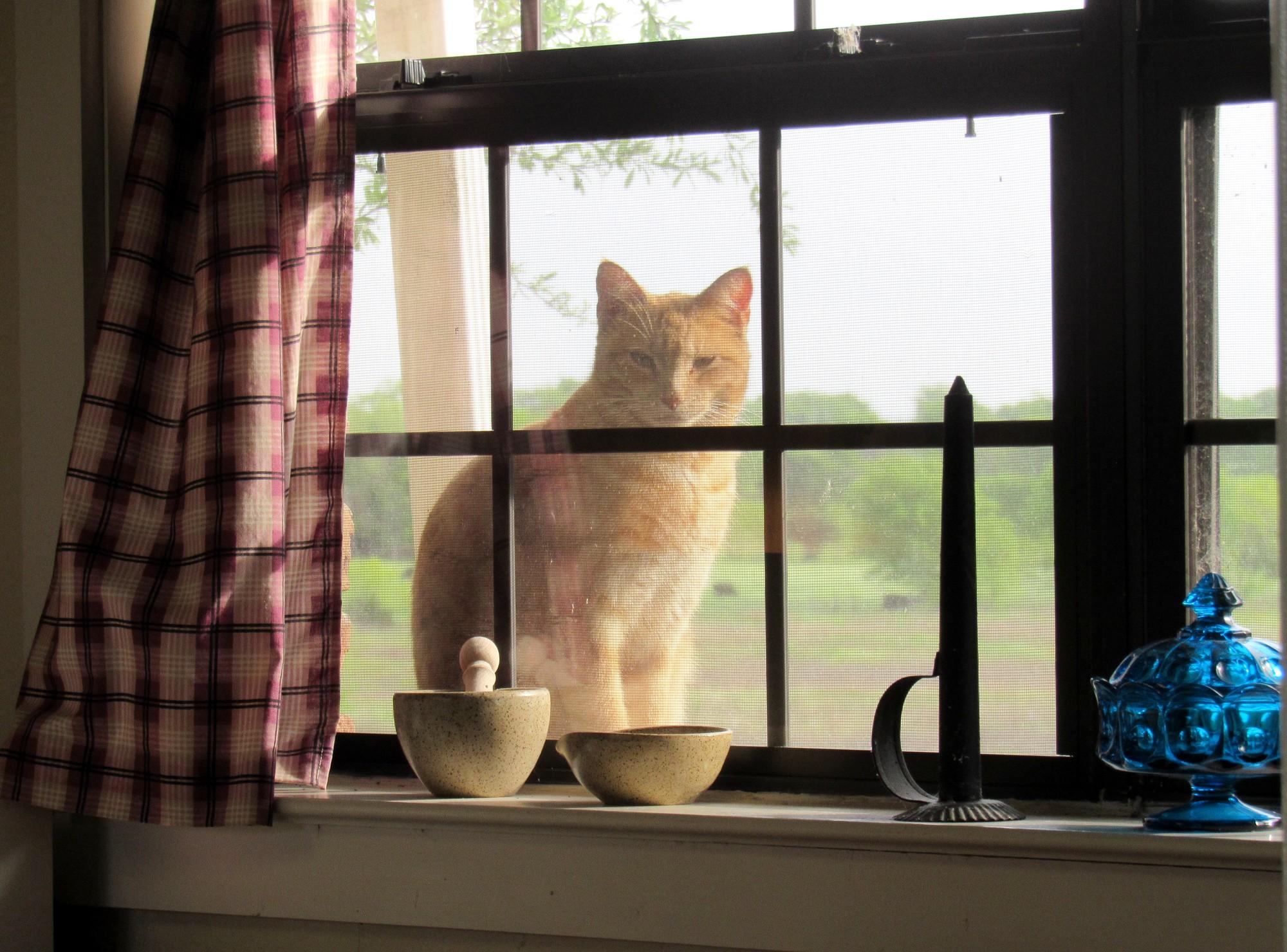 Kitchen Window View.jpg