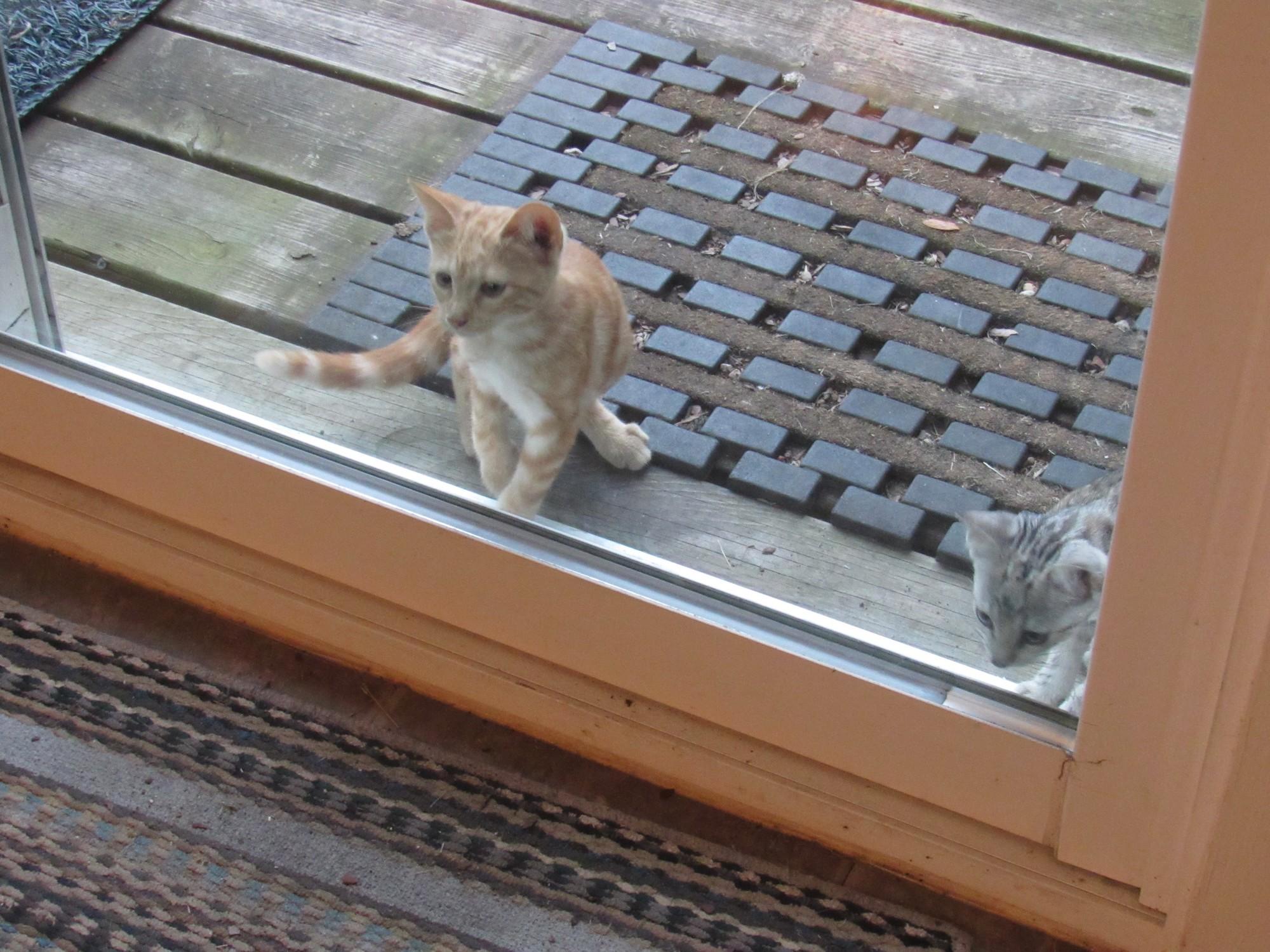 Kittens on deck.jpg