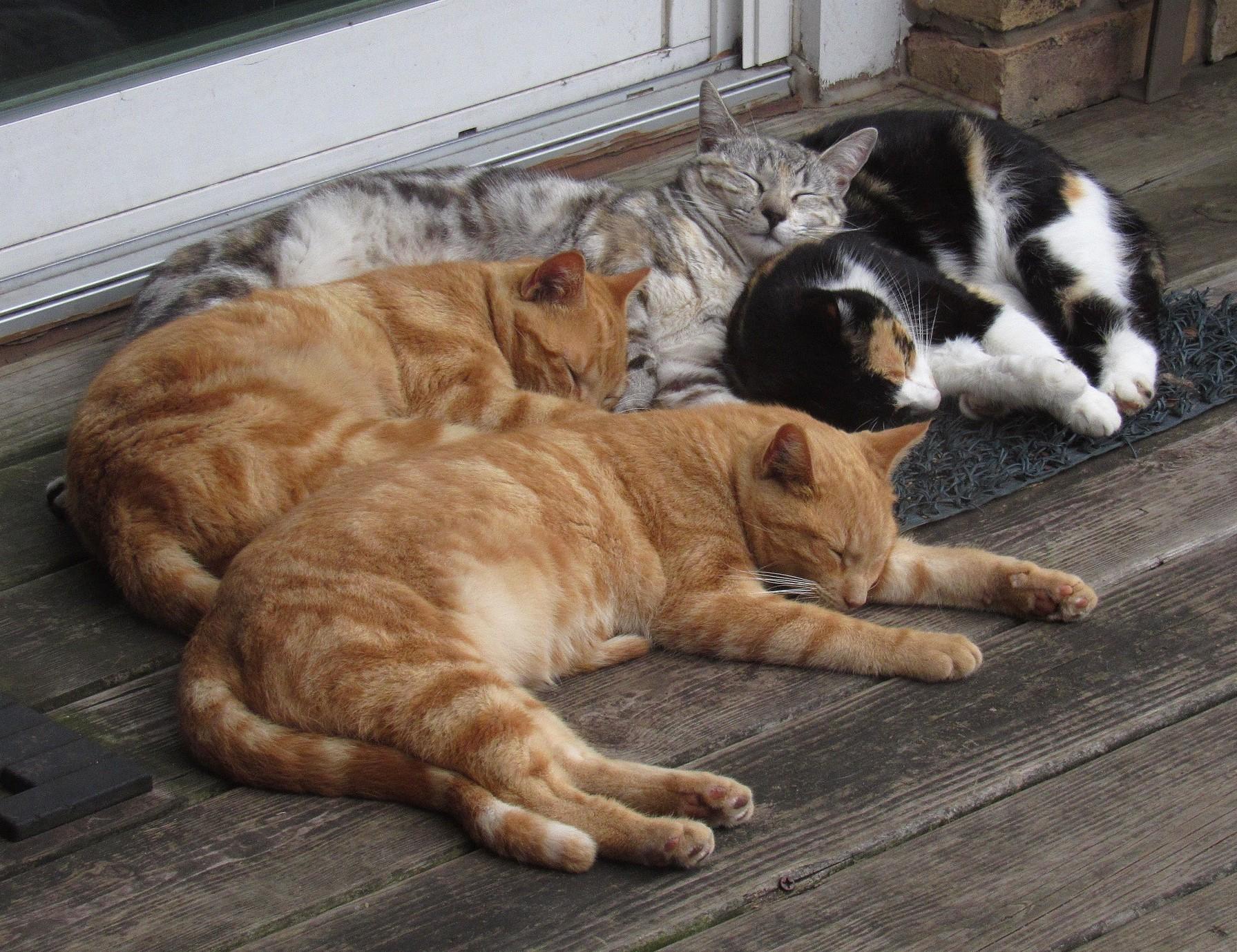 Lotsa cats.jpg