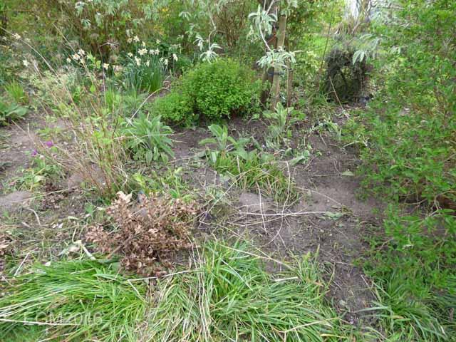May 2016 Garden 059.jpg