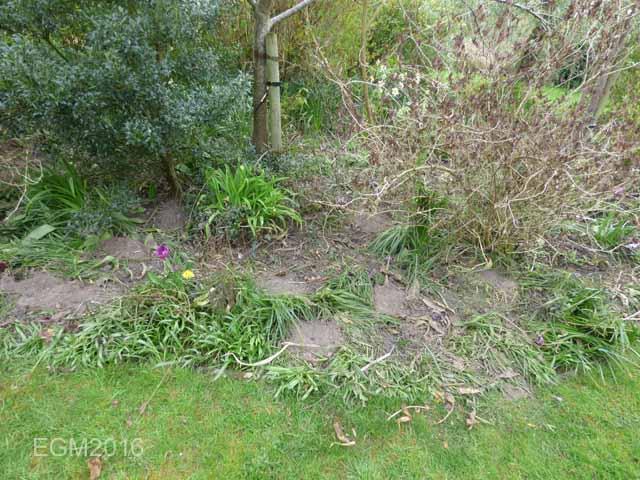 May 2016 Garden 062.jpg
