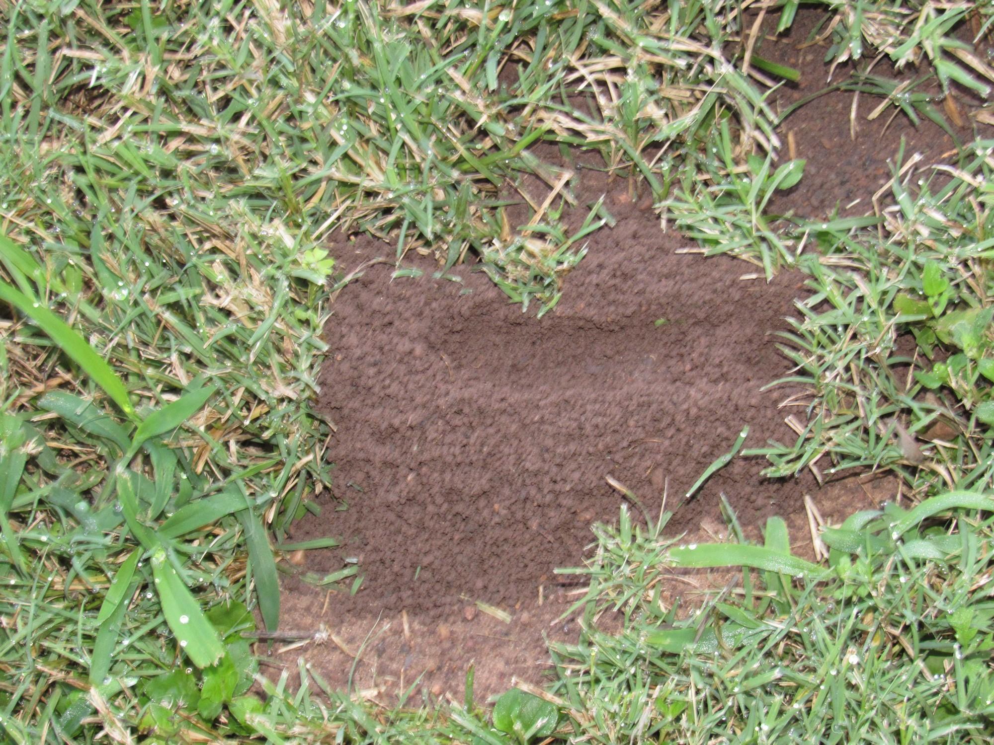 mound 1.jpg