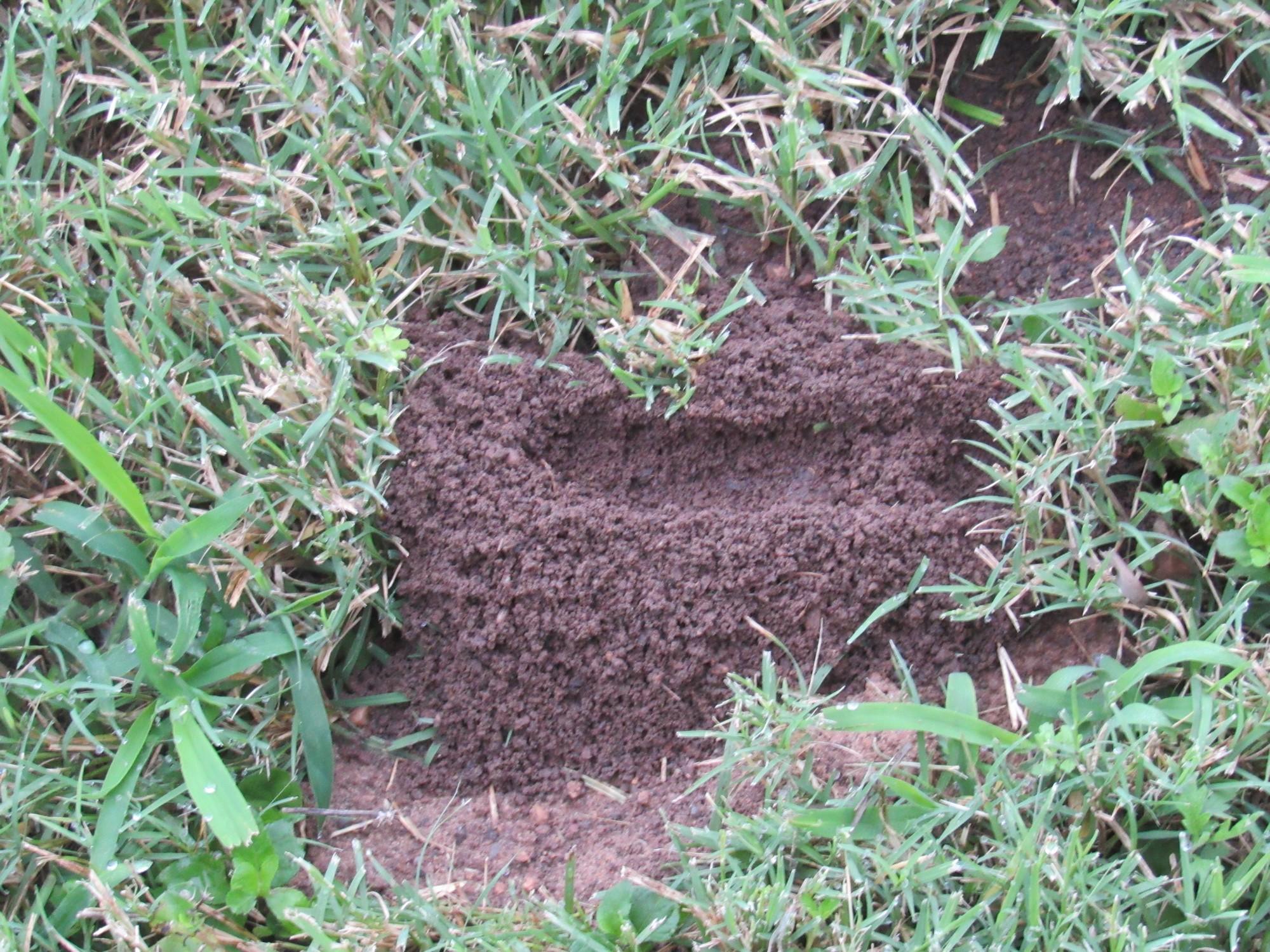 mound 2.jpg
