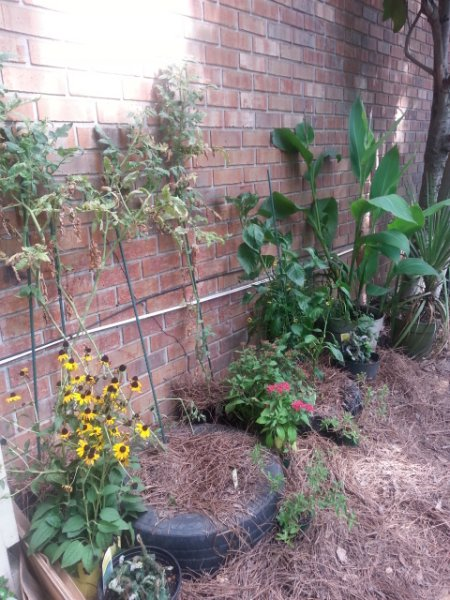 New use for old tires (tomato & pepper planters) 8-14-16.jpg