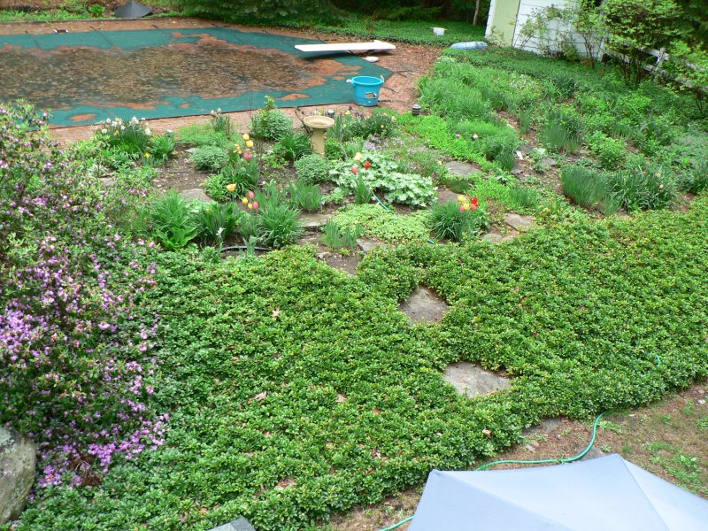 How Oh Do I Get Rid Of The Dreaded Pachysandra