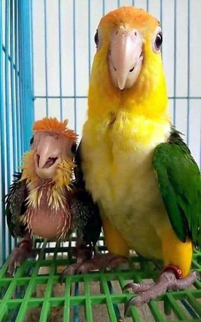 parrot-mom.jpg