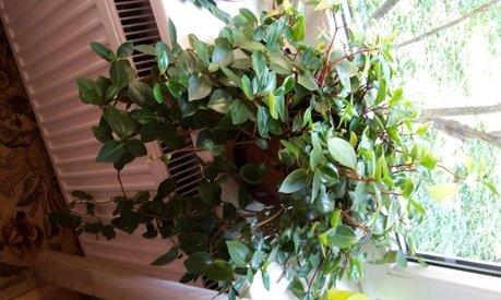 plantsymcplantface.jpg