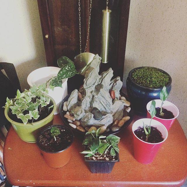 planttable.jpg