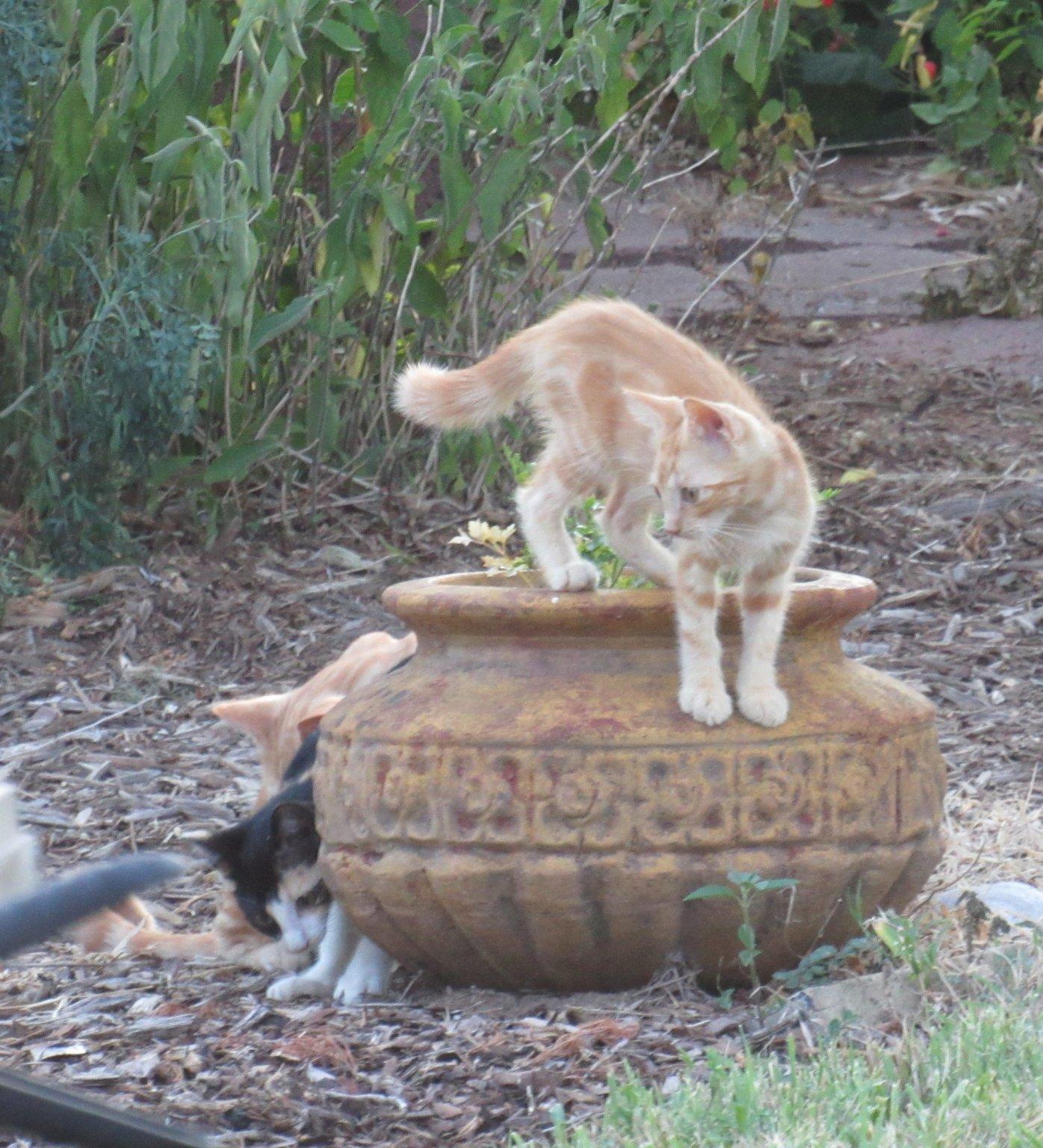 potted kittens.jpg