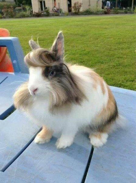 rabbithair.jpg