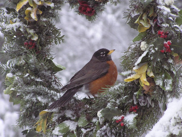 robin wreath.jpg