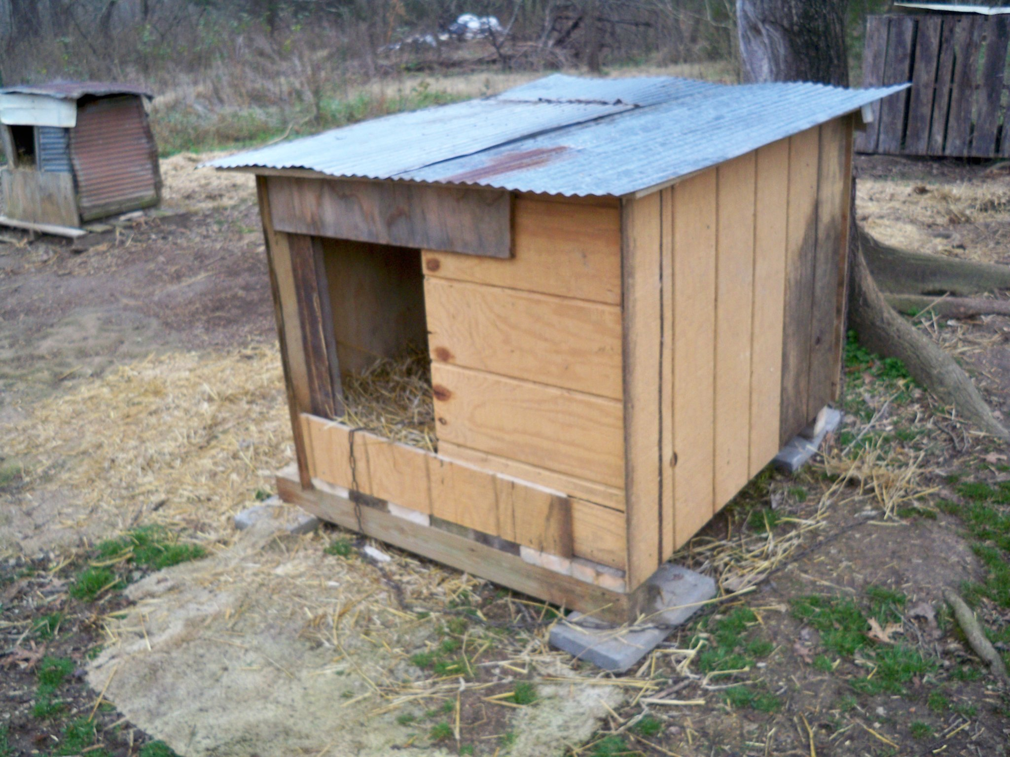 Sasha's new doghouse.JPG