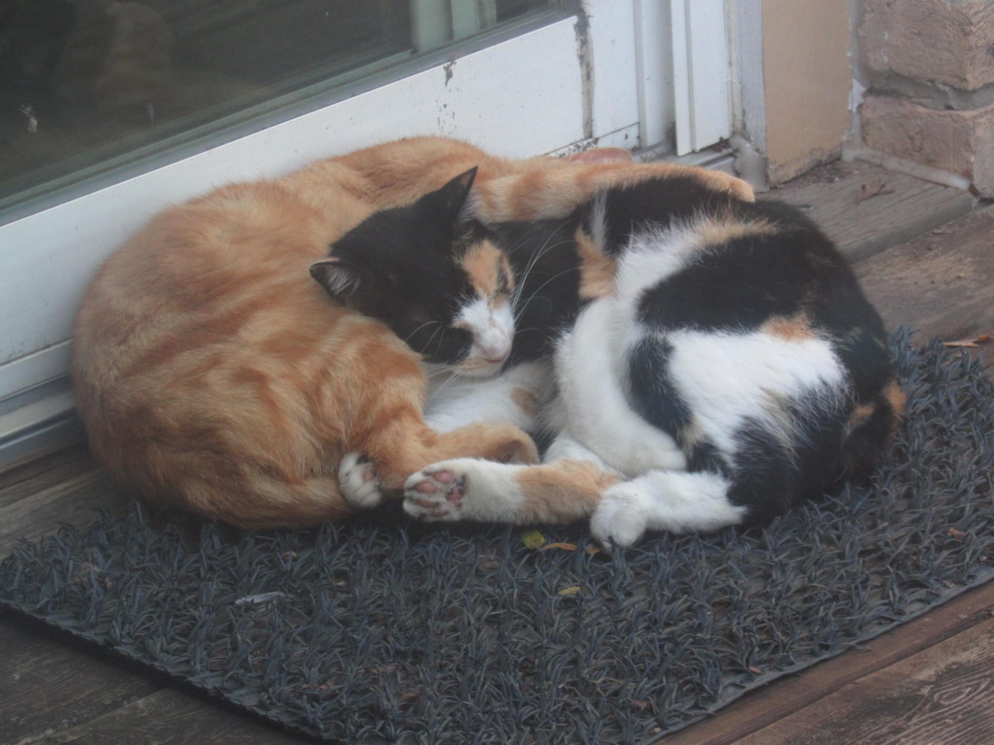 Sis and Bro naptime.jpg