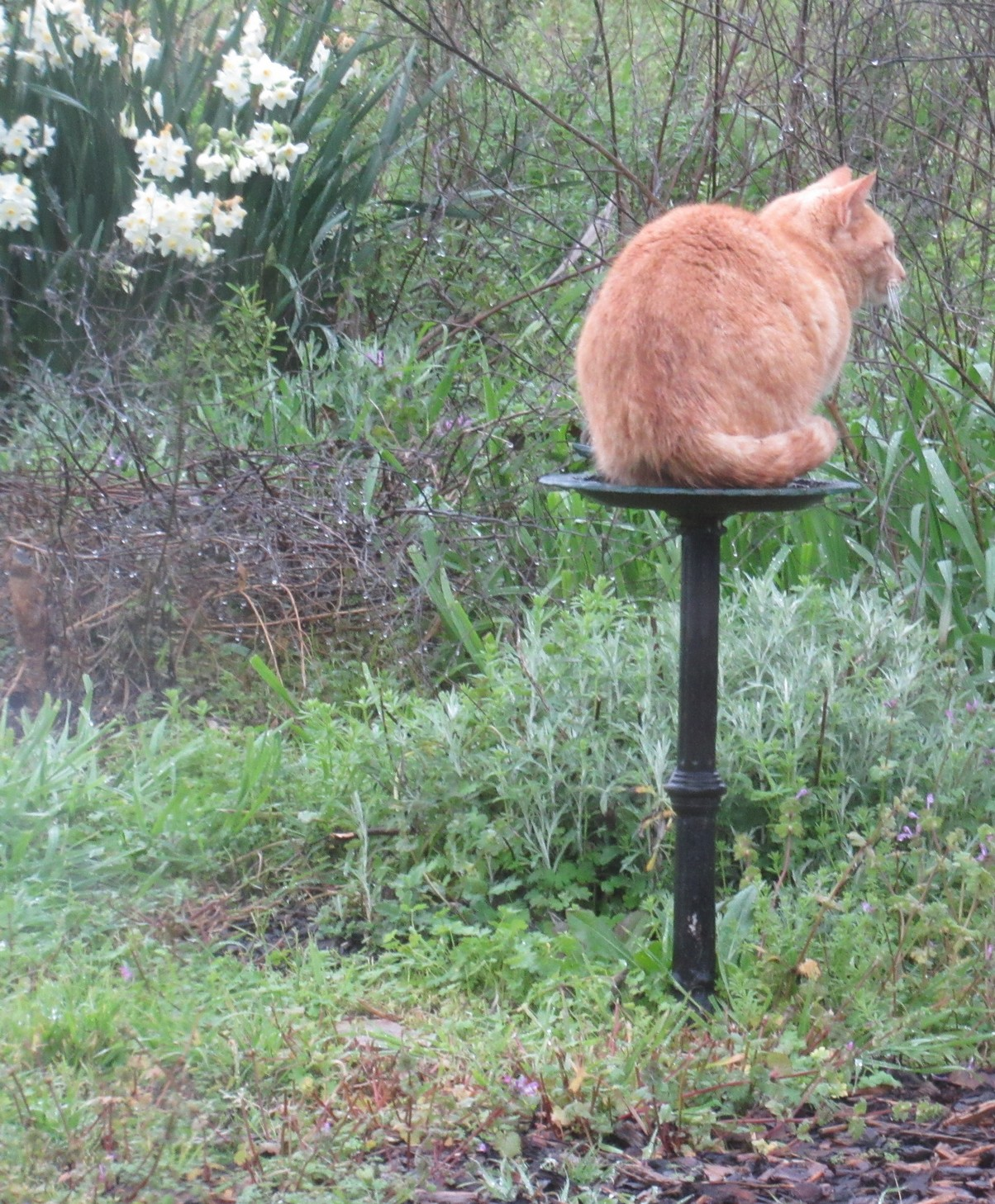 Timi on butterfly waterer.jpg