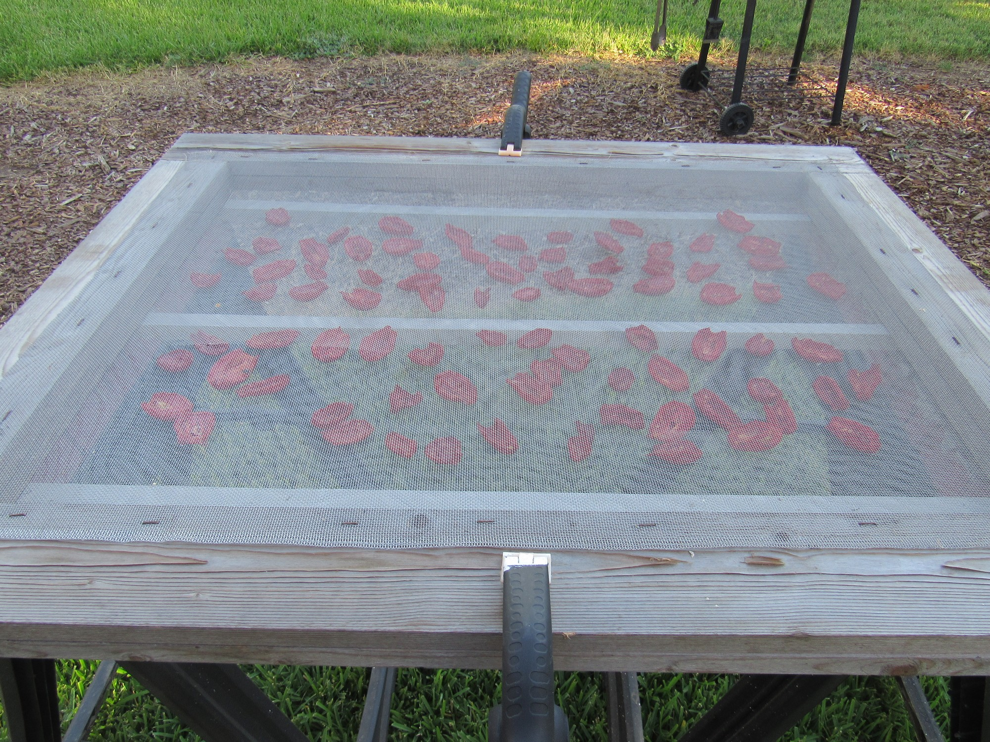 tomatoes drying.jpg