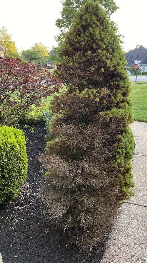 tree on left.jpg