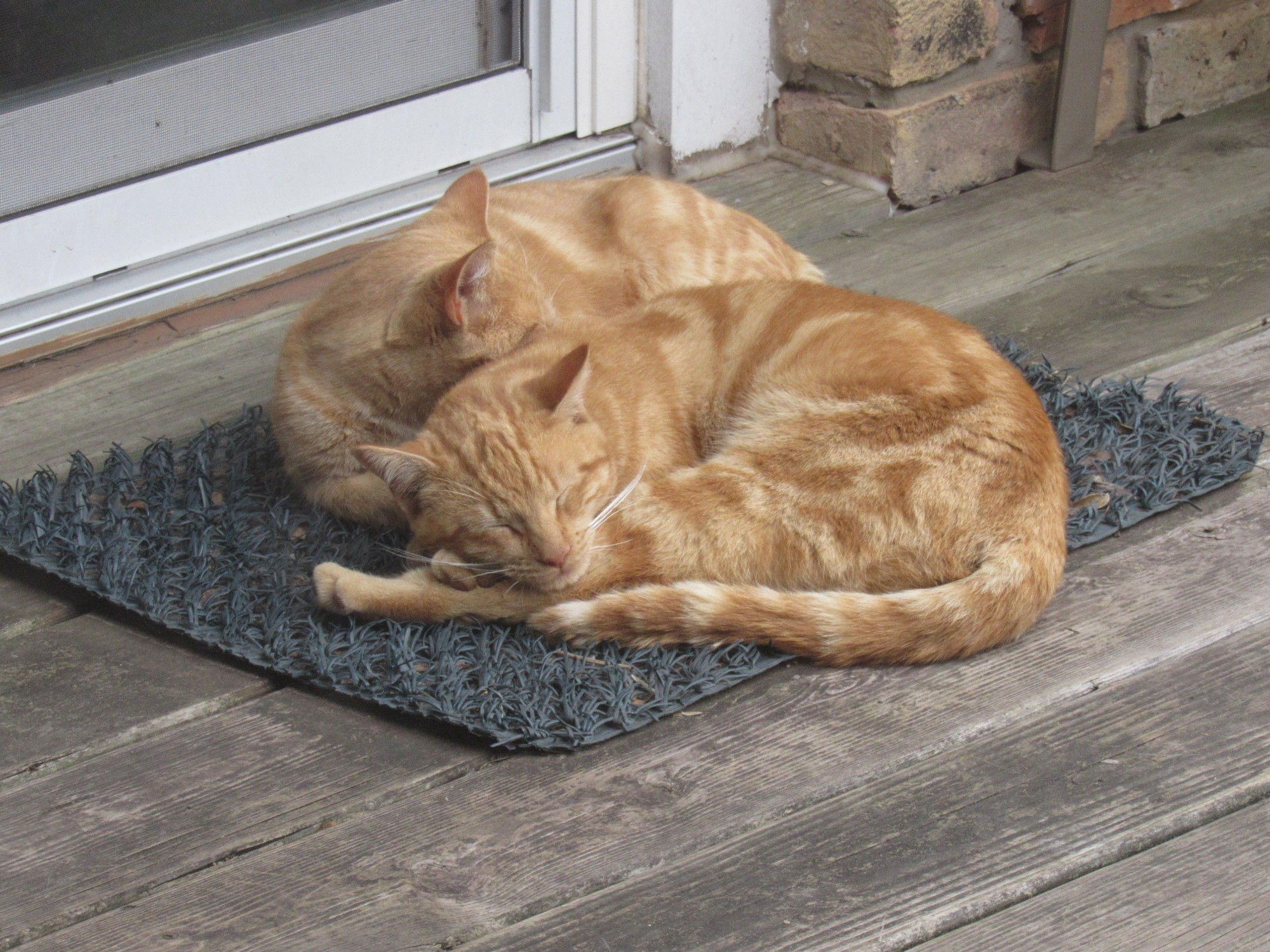 two cat mat.jpg