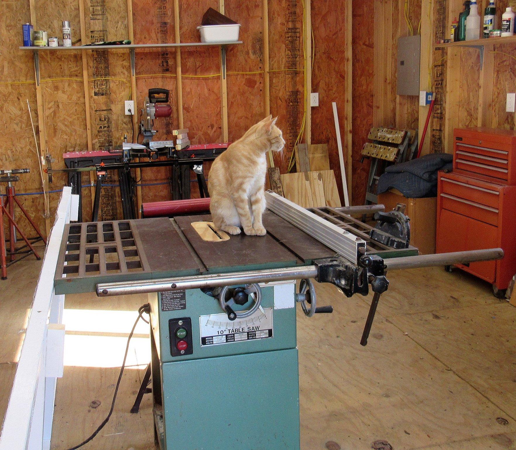 Woodworking Timmi.jpg